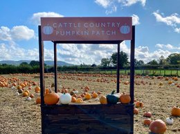 What's on this October - Cattle Country Pumpkin Picking
