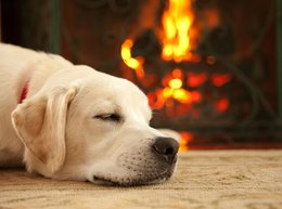 Labrador relaxing by a fire in a house prepared for winter